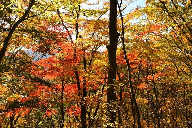 御正体山~石割山 紅葉真っ盛り!電車とバスで行く秋の日帰り登山