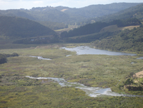 Bethells Valley, Waitakere River Swamp