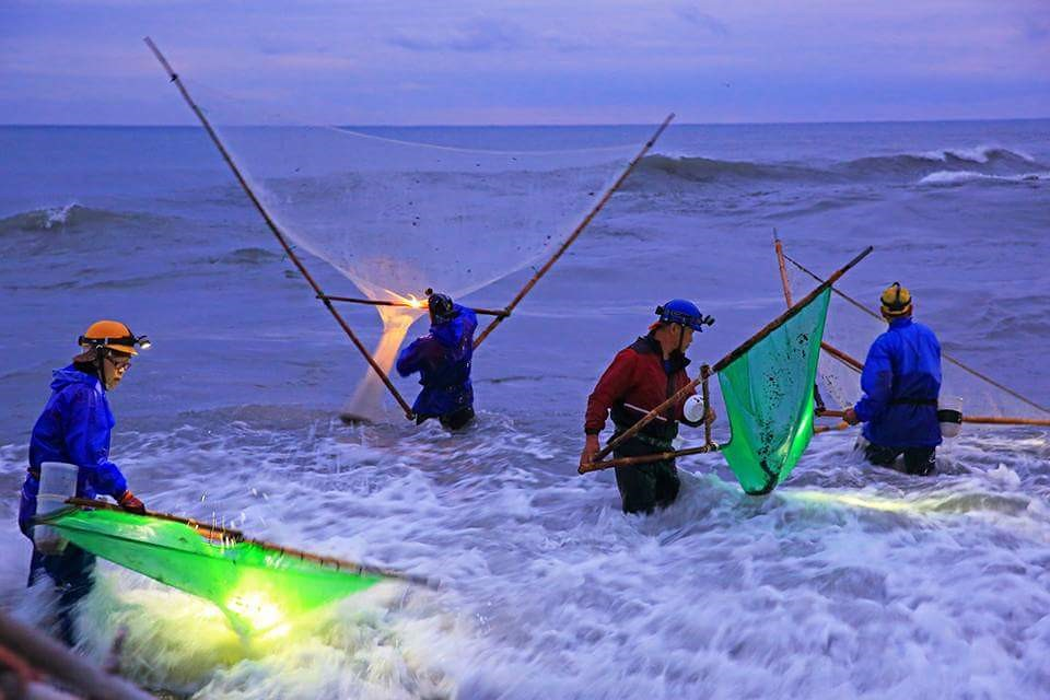 漁民用三角網捕撈鰻苗。圖片來源:韓玉山。