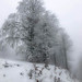 My_1st_impressions_Forest _Bjelašnica_Bosnia-17