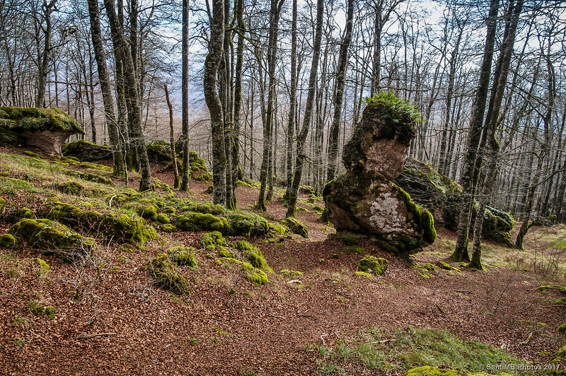 La roca El Patito en el Bosque Encantado de Urbasa