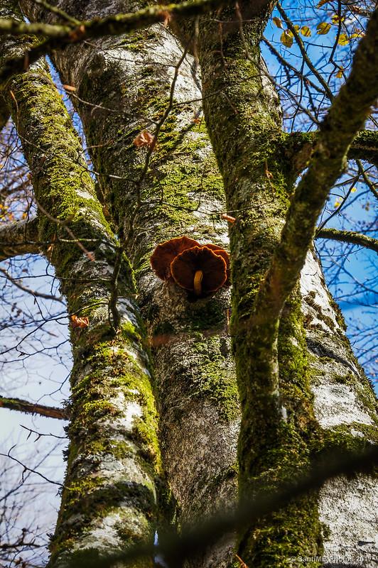 Setas en el tronco de un haya