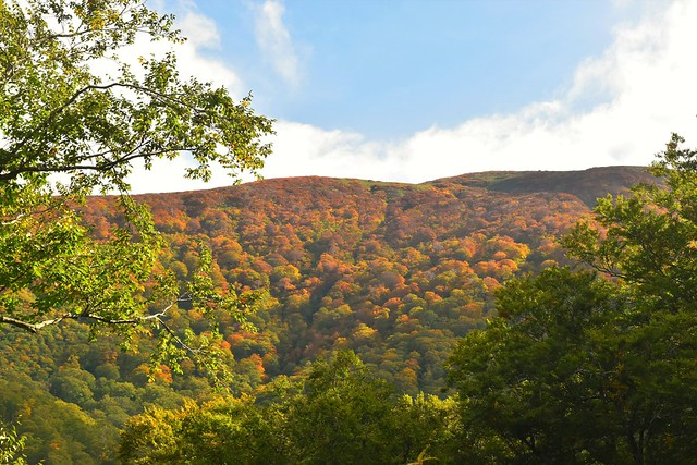 以東岳登山道から見る紅葉