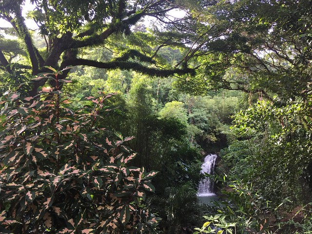 Annandale Falls (Isla de Granada)