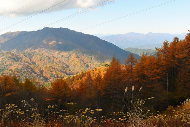 石割山から杓子山とカラマツの紅葉