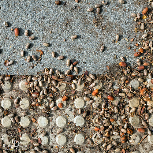 seed | ground works | tenerife | by John FotoHouse