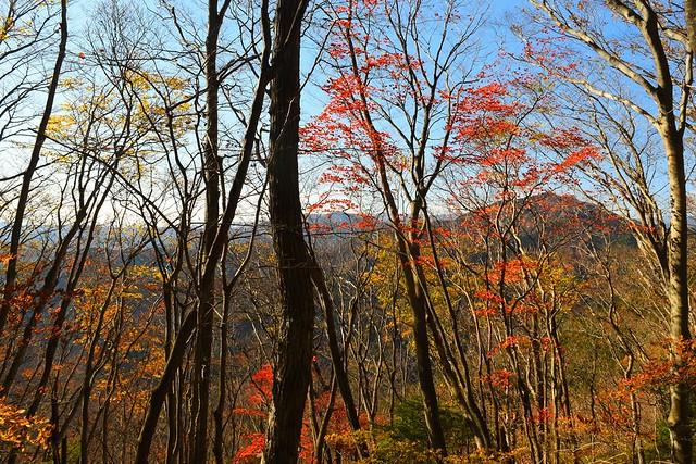 奥多摩・大岳山の紅葉