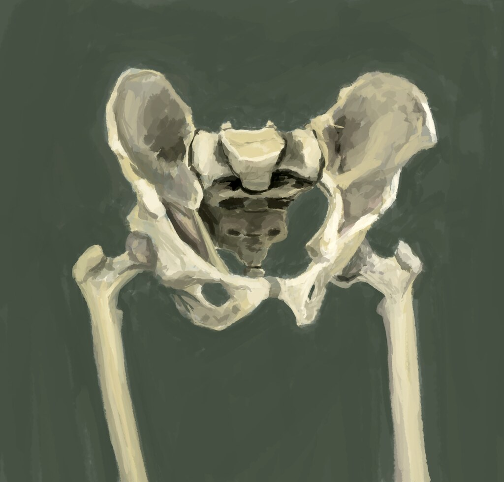 Skeletal Anatomy of the Hips | Reworking through all anatomy… | Flickr