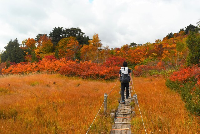 鳥原山湿原の紅葉風景