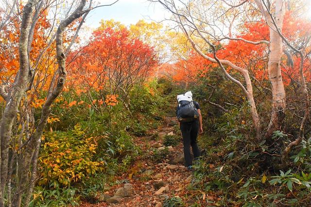 小朝日岳の紅葉のトンネル