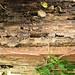 Abandoned beehive