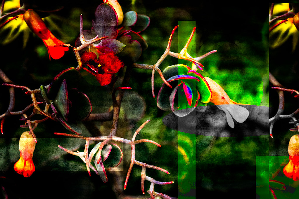 Tangled geometry: abstract cactus flowers