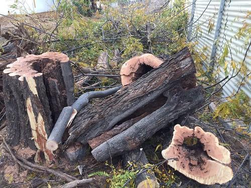 AionSur 37946634455_805ac39907_d Jaedilla Ecologistas en Acción denuncia que la tala de La Fuente ha sido un 'arboricidio' Medio Ambiente