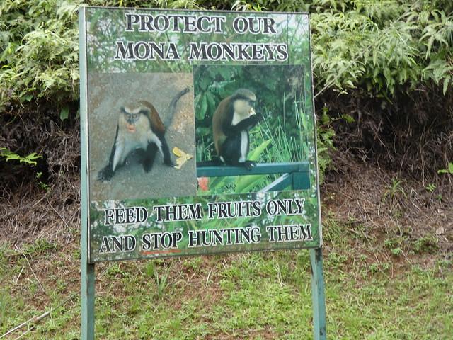 Cartel con información sobre los Mona Monkeys de Granada (Caribe)