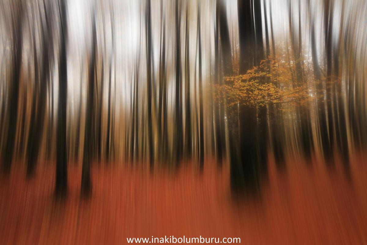 01.- &quot;Ametsen basoa/<br />El bosque de los sueños&quot;- Inakibo