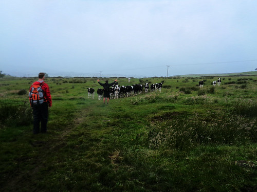 Emergency cow control