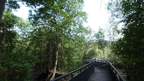 Sungei Buloh Wetland Reserve: Mangrove boardwalk | by wildsingapore