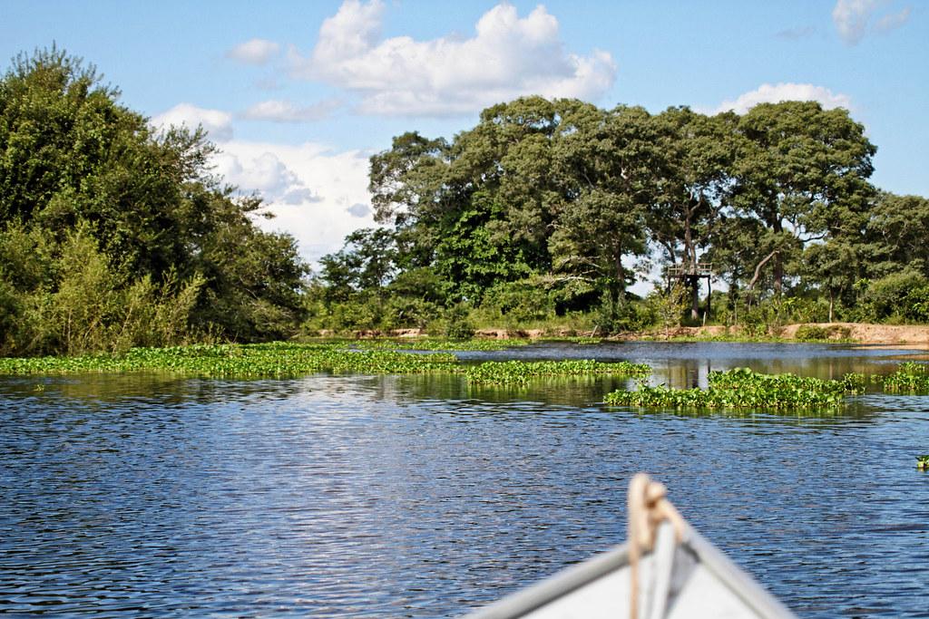 乘船遊潘特納爾濕地。圖片來源:Ronald Woan(CC BY-NC 2.0)