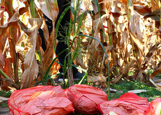 harvest-bags | by MizzouBiology