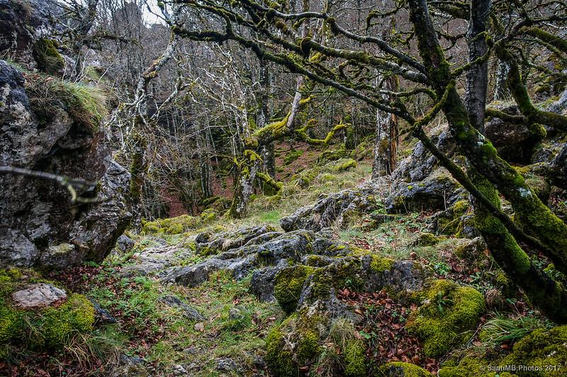 Bosque en lo alto de Urbasa