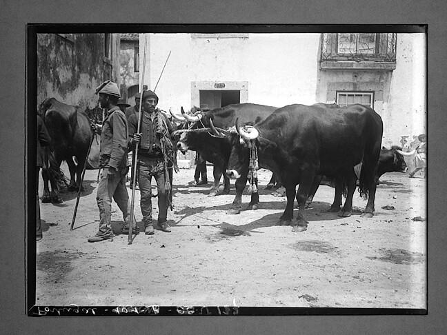 Feira de gado, s.l. (Ch.-Flaviens, G:E:H., s.d.)