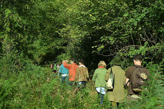 Adventures to the wild - a group walk along a path in a woodland glade