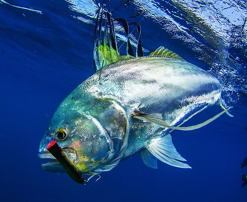 Australia online fishing tackle store reel shimano diawa p for Online fishing store
