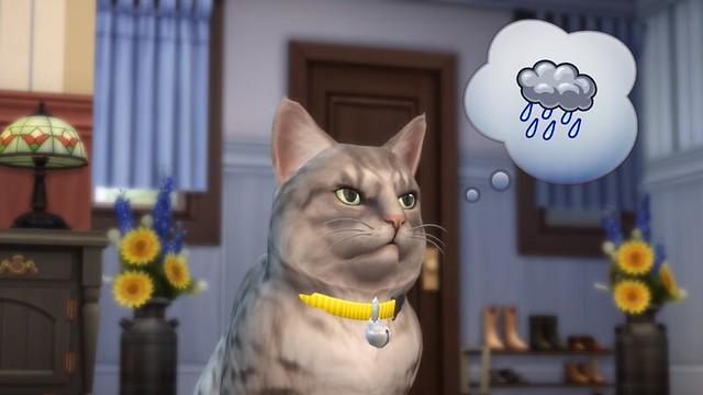 gato com balão de pensamento