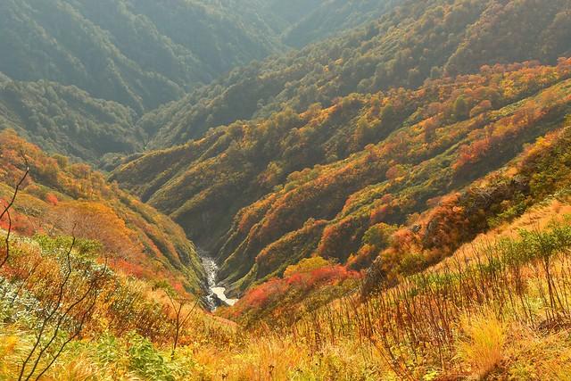 朝日連峰 谷底の紅葉風景