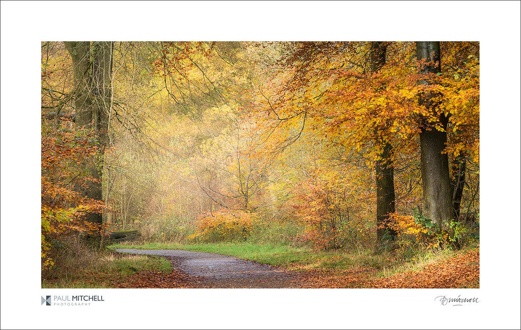 Savernake Autumn