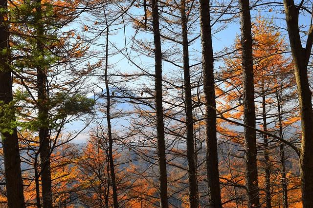 御正体山~石割山 登山道からの富士山