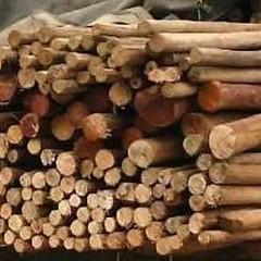 Veda de la madera en Tolima