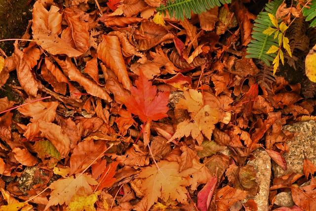 落ち葉敷かれた紅葉の登山道