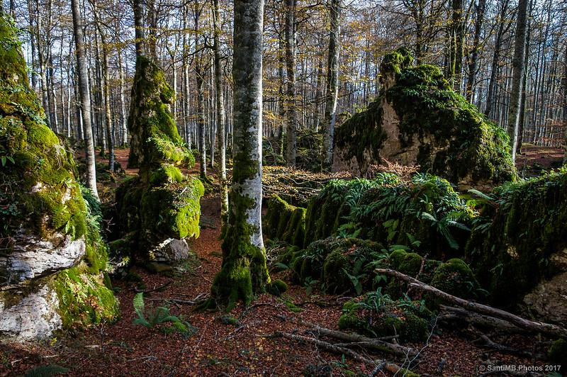 Hacia la roca El Velero en el Bosque Encantado de Urbasa
