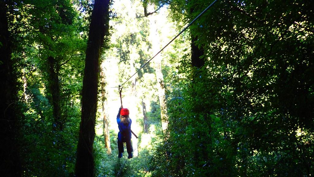 「Rotorua canopy tour」在國際性旅遊評論網站tripadvisor被選為北島最推薦參加活動的第一名