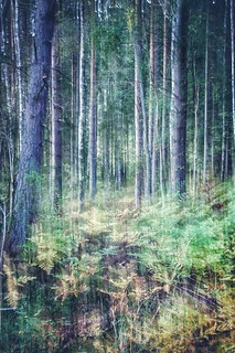 ICM from the Swedish woods | by Moodestysplace