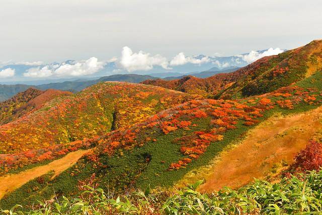朝日連峰 10年に一度の当たり年と言われる紅葉