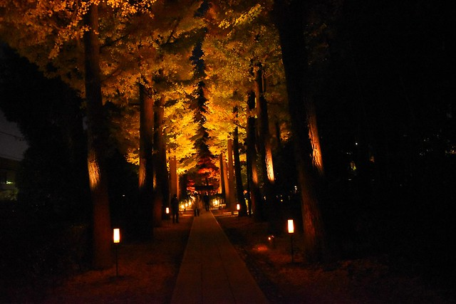 大田黒公園 イチョウ並木(夜)