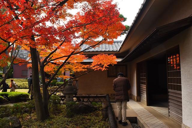 大田黒公園 茶室前の紅葉