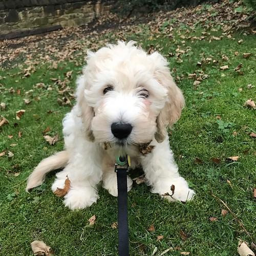 dogsofinstagram Daisy, The World. The World,...
