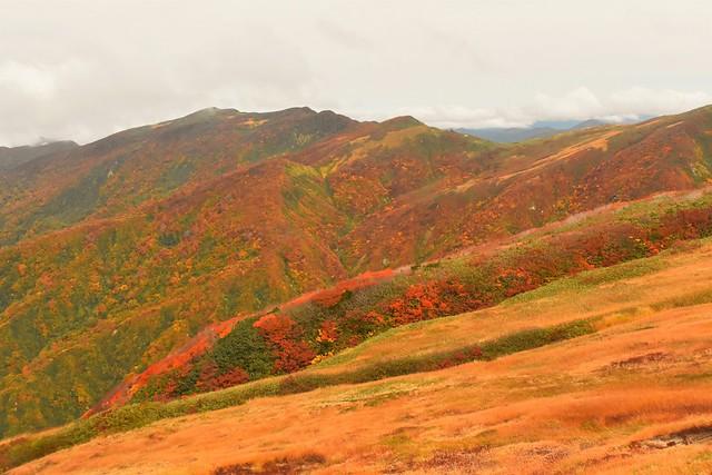 以東岳~オツボ峰稜線の紅葉