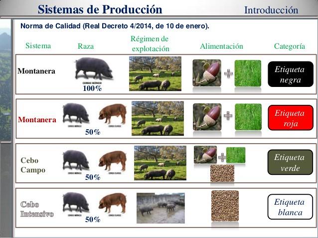 Presentación de David Tejerina Barrado del Área de calidad de carne de CICYTEX.
