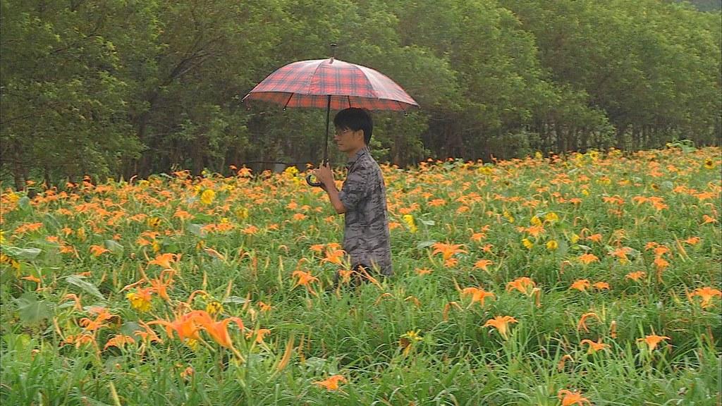 930-2-18王順瑜在頭社盆地培育出不怕水的金針花,有三公頃面積通過有機認證。