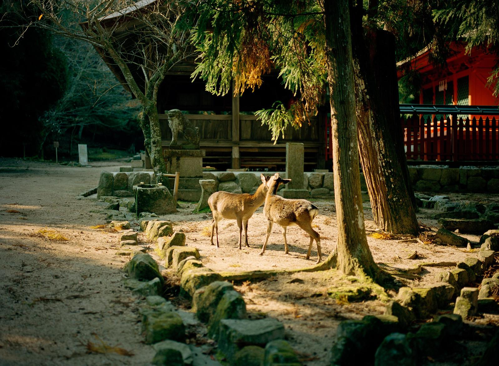 deers | by Kenji Kitae