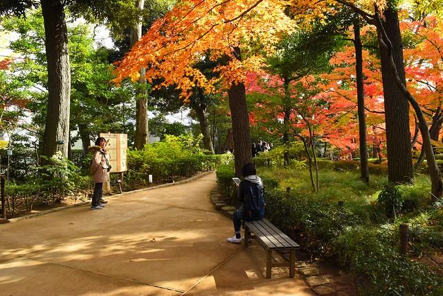 大田黒公園 ベンチ