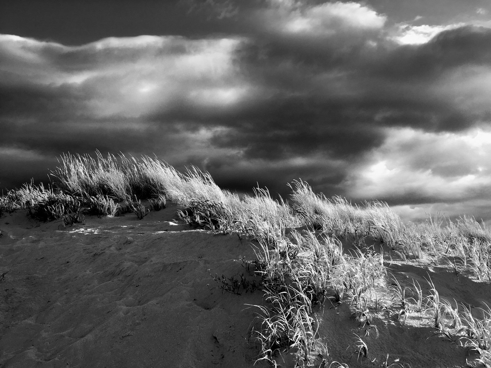 dunes/ grass/ clouds b&w | by sylvie joy