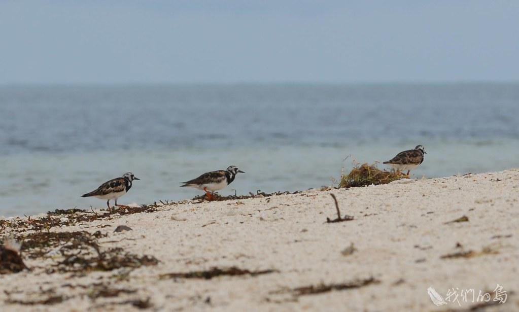 933-1-2高雄鳥會在東沙島調查到大約295種的鳥類,這裡是許多候鳥遷徙的休息站。