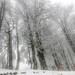 My_1st_impressions_Forest _Bjelašnica_Bosnia-15
