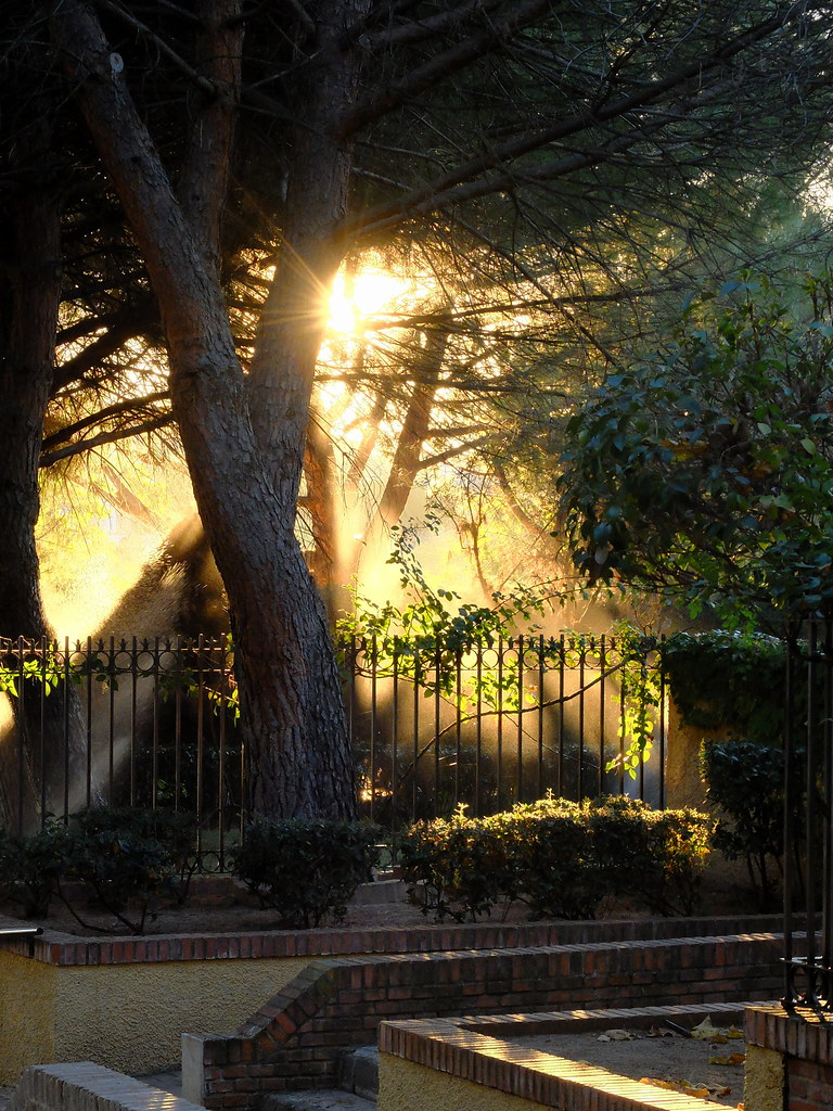 ... Sunburst with sprinklers | by Read About Dave Barnett & Sunburst with sprinklers | david alexander barnett | Flickr