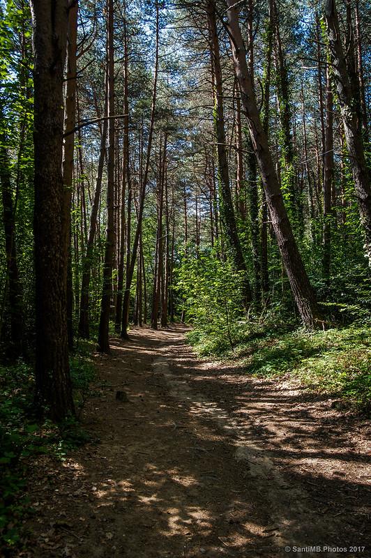 De camino al Pantano de Santa Fe de Montseny